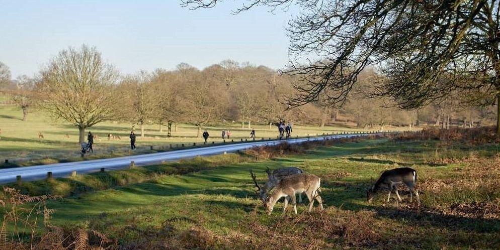 Visita a los ciervos en Richmond Park